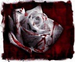 Rosa de sangue